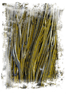 seaweed sensations tm, organic irish sea spaghetti seaweed